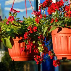 [Garden Pots] Hanging plant pots