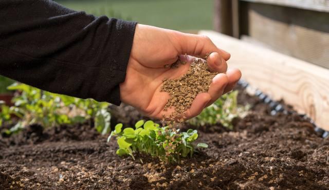 a person's hand sprinkling fertiliser on soil