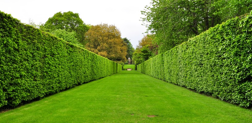just look at those beautiful private hedges right there