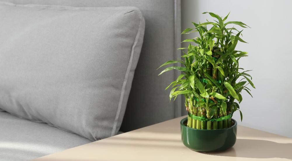 top unkillable indoor plants