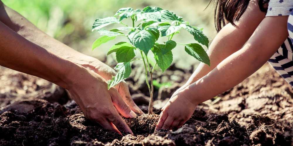 transferring pot plants to garden