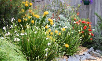 native australian plants