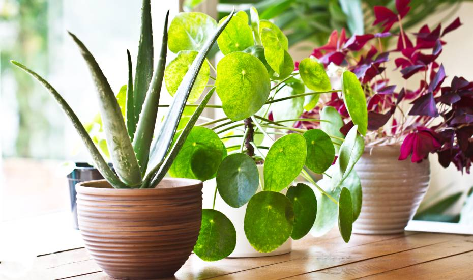 indoor plants displayed on a table