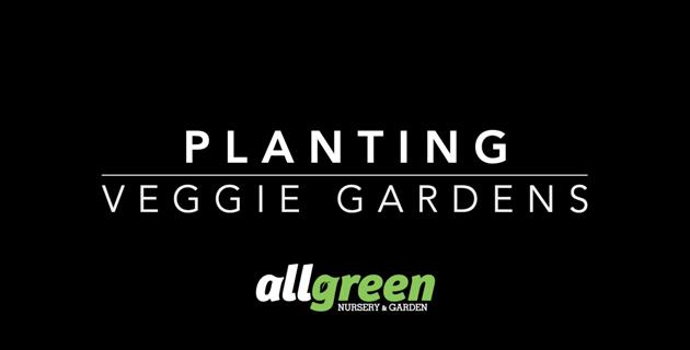 Planting Veggie Gardens