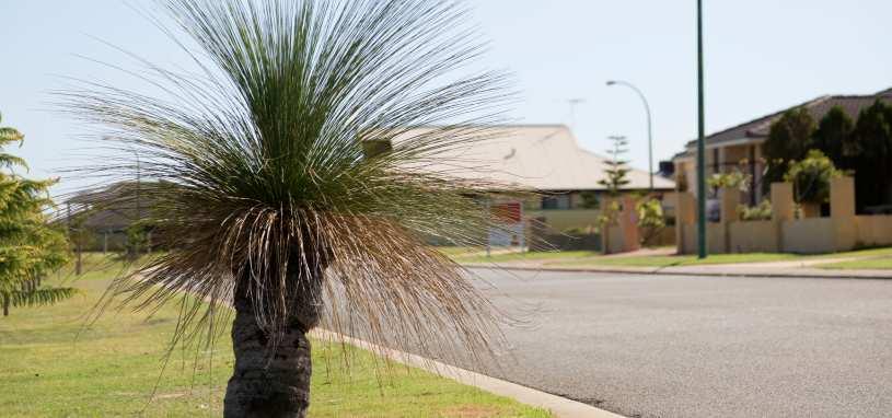 Grass tree garden