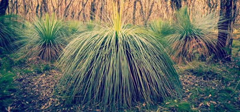 grass trees landscape