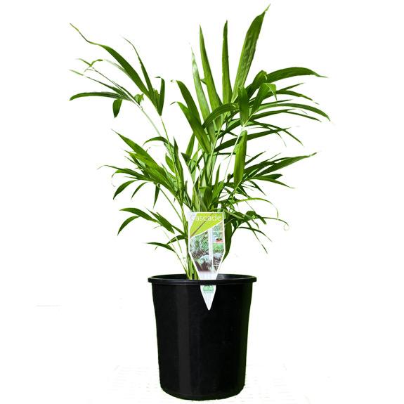 [Palm trees] Cascade
