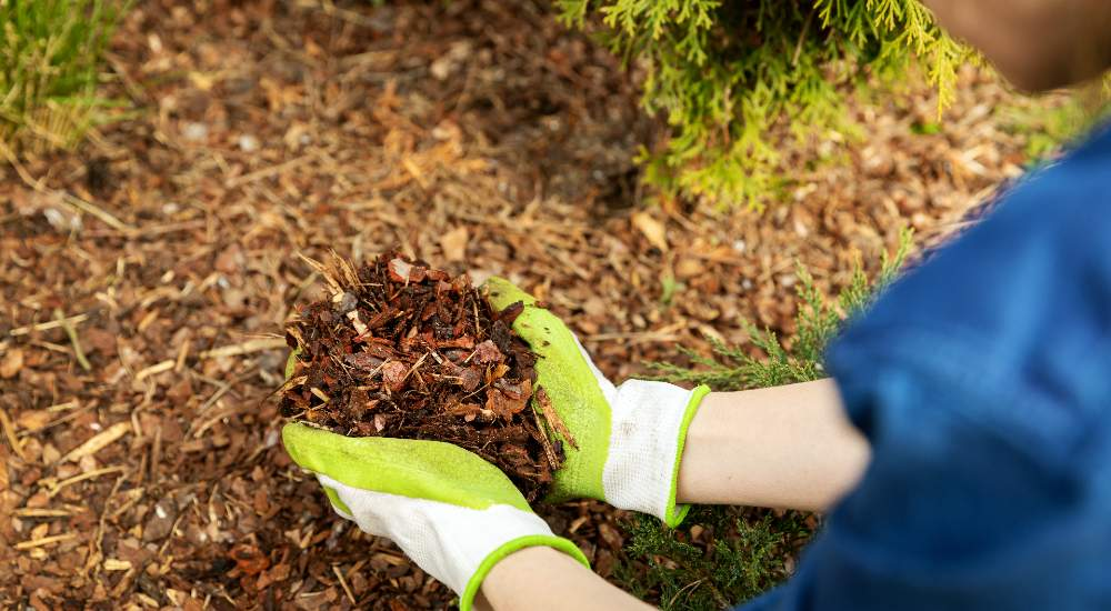 best mulch for your garden