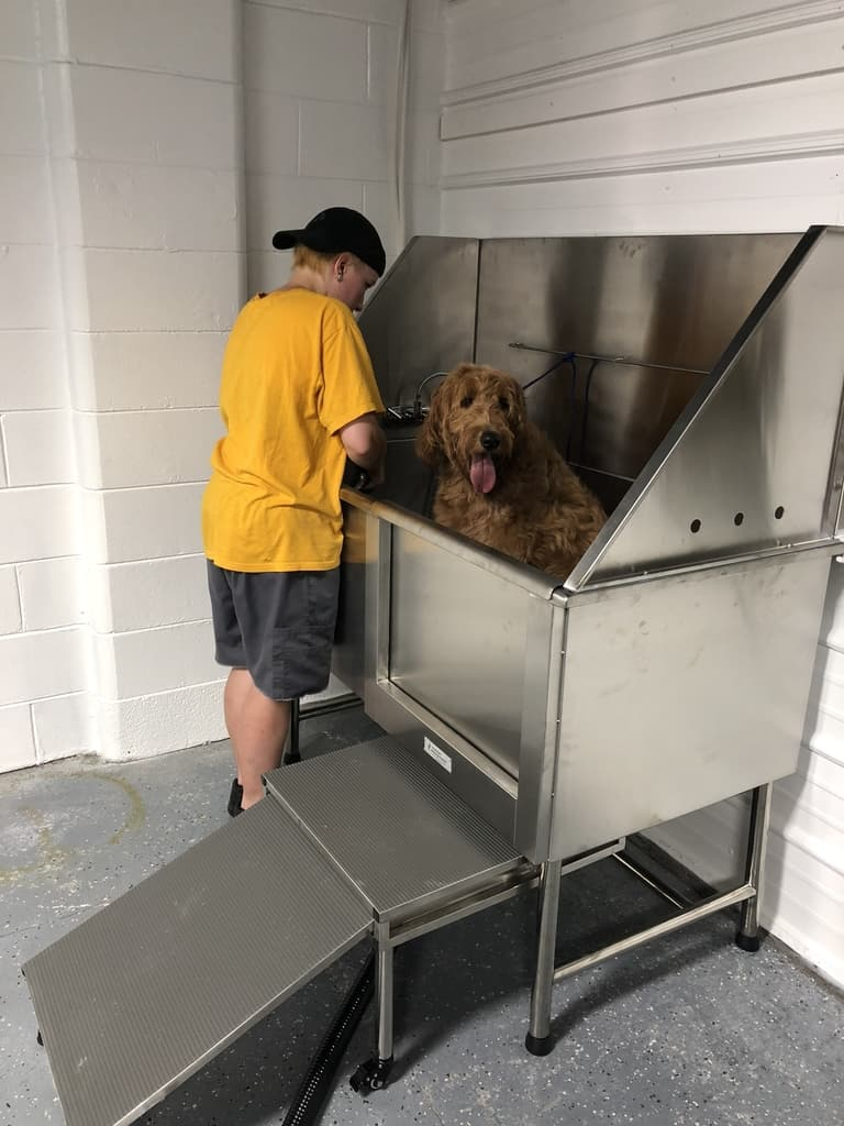 Club Canine Dog getting bath