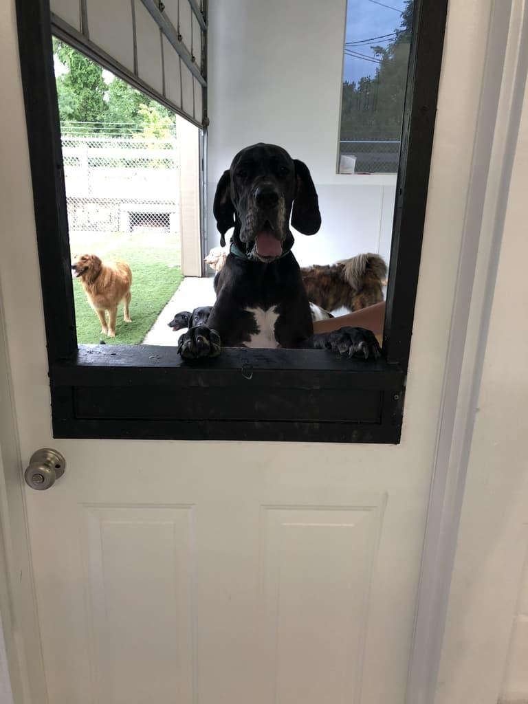 Club Canine Dog looking through window