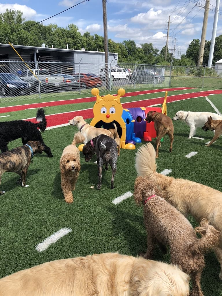Club Canine Dog obstacle course