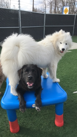 Club Canine Doggy Daycare Dogs 2