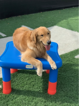 Club Canine Doggy Daycare Dogs 40
