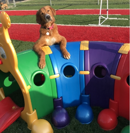 Club Canine Doggy Daycare Dogs 10