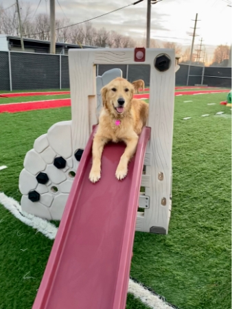 Club Canine Doggy Daycare Dogs 12