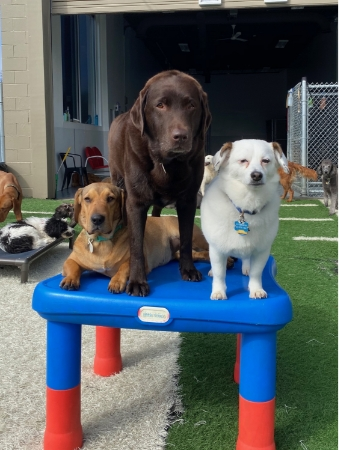 Club Canine Doggy Daycare Dogs 14
