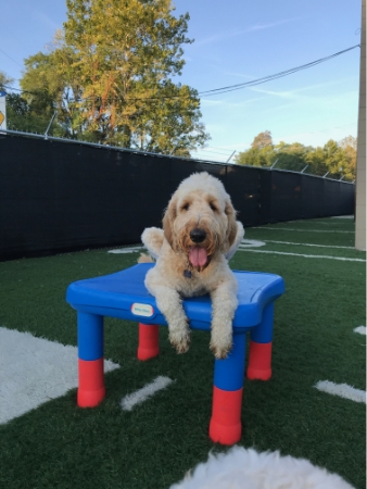 Club Canine Doggy Daycare Dogs 19