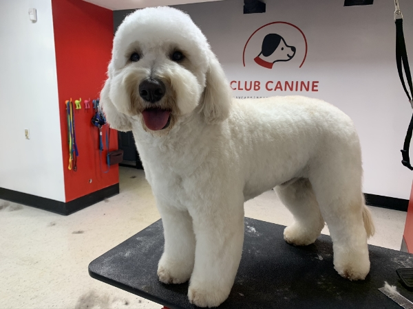 Club Canine Doggy Daycare Dogs 25