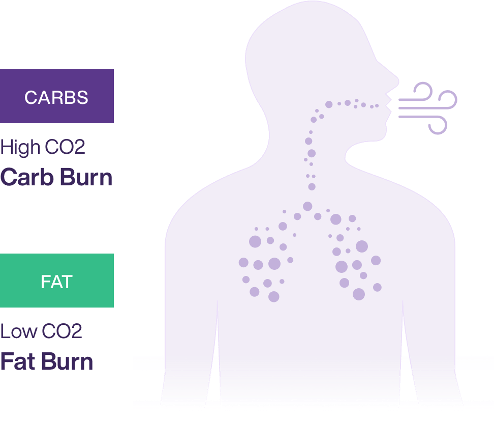 sketch of person breathing to represent how metabolism is measured through the breath