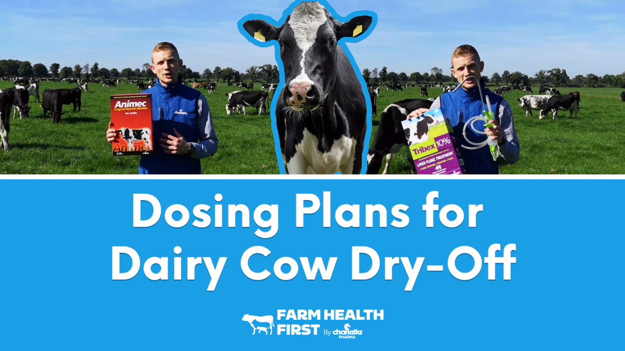 Dosing Plan for Dairy Dry Off