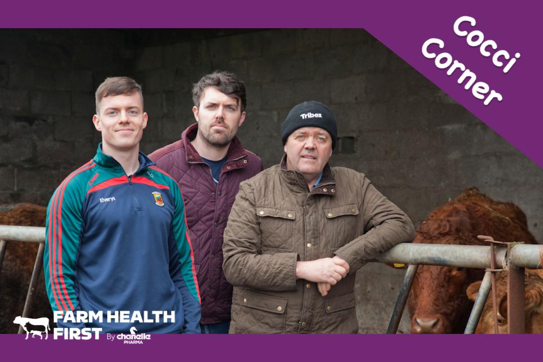 Cocci Corner - Meet our Cattle & Sheep Farmers