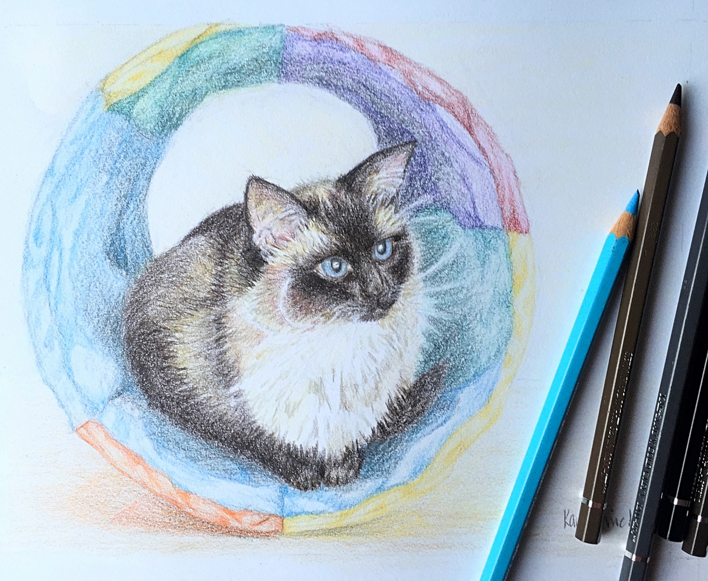Drawing of cat 'Cleo.' Coloured pencil on paper.