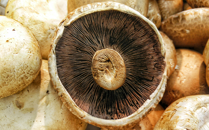 To improve immune function, strengthen lungs, and improve oxygen utilization, add medicinal mushrooms to your healthy meals.