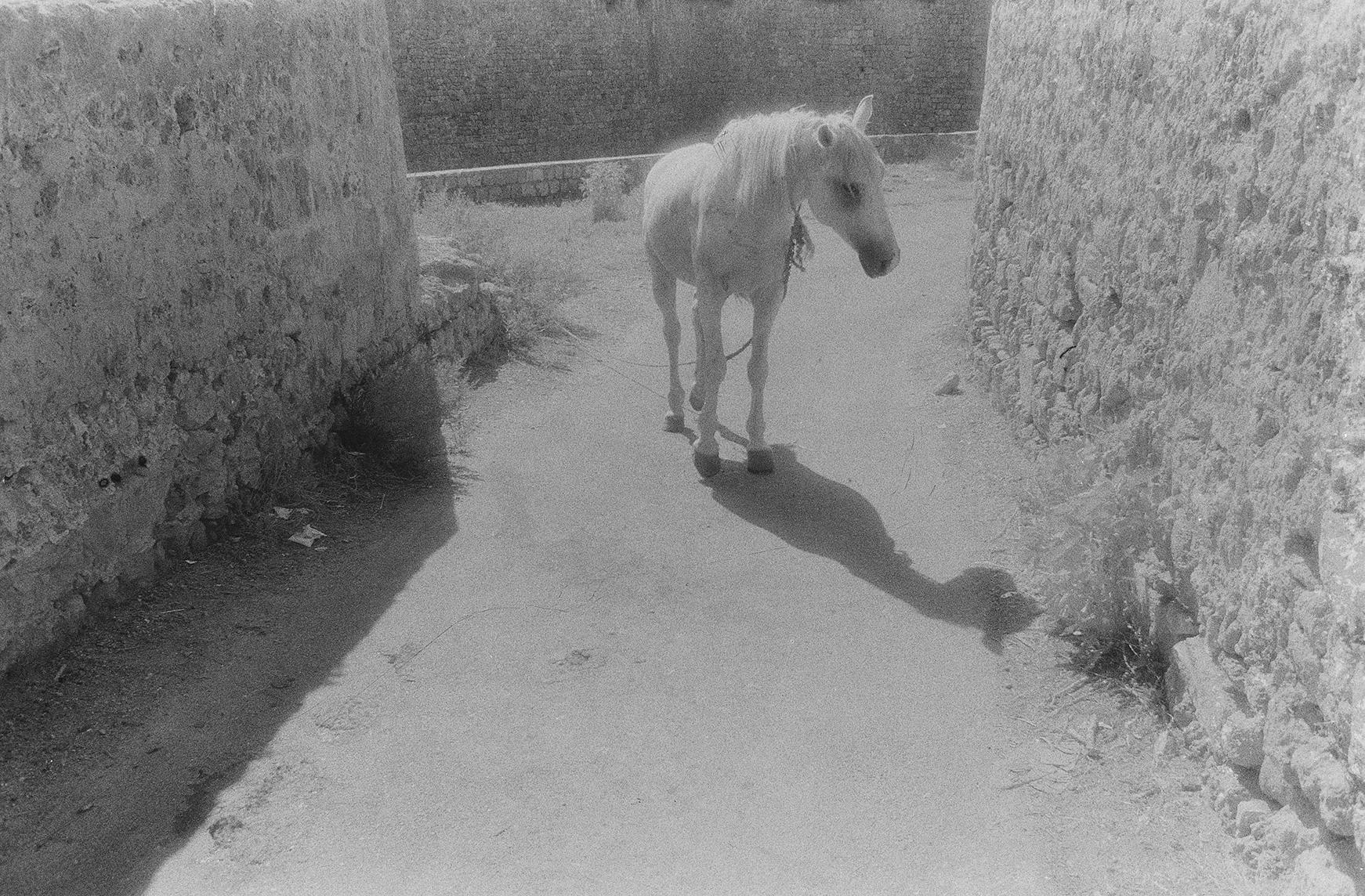 White Horse, Acre