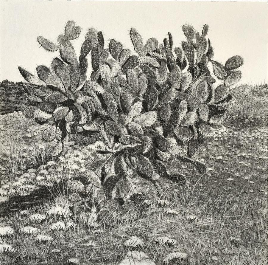 Samah Shihadi / From The Landscape Series # 7