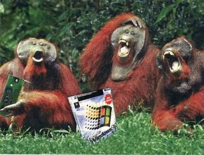 monkeys-laughing-at-windows