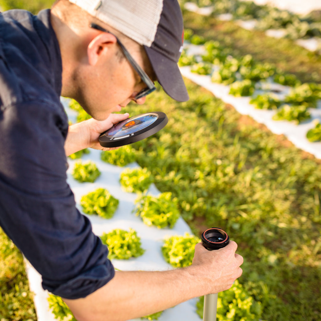 scientist installing sensor into field of crops