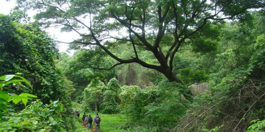 Places to Visit around Mumbai-Sanjay Gandhi NationalPark