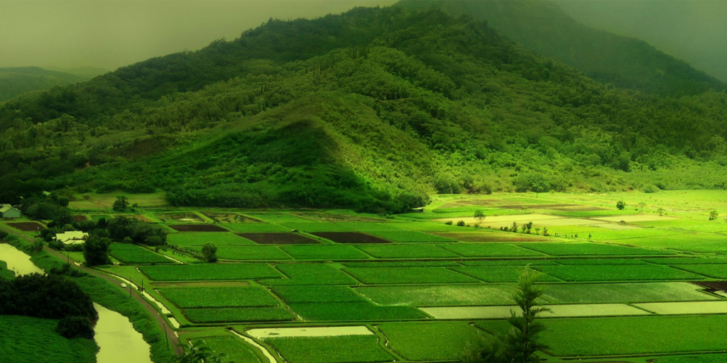 hill stations near Bangalore - Coorg