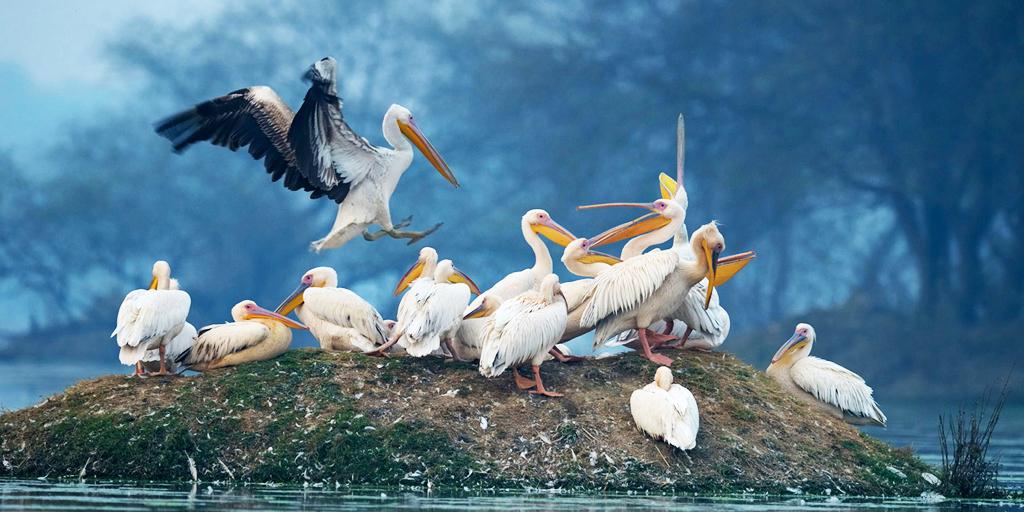 weekend getaways fro Ahmedabad - Nal-Sarovar-Bird-Sanctuary