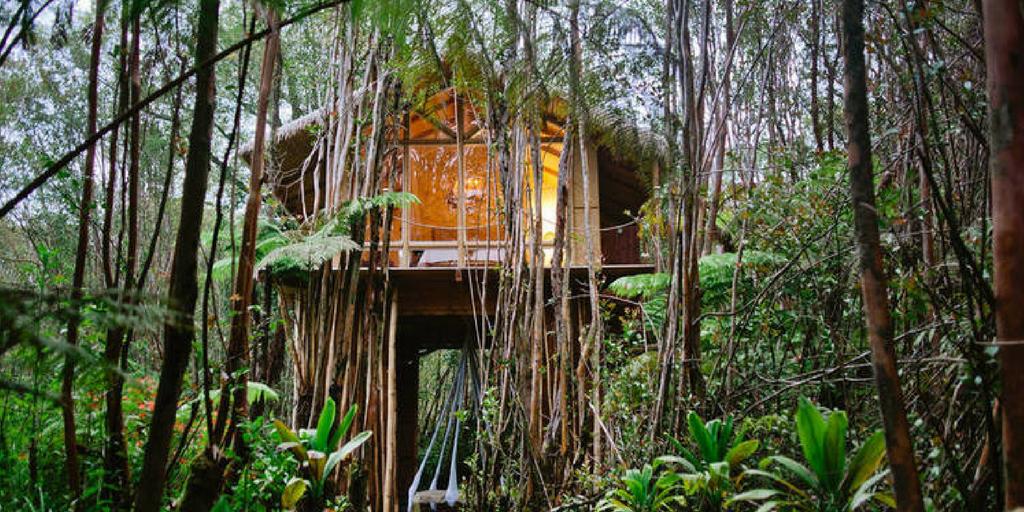 Treehouse homestays