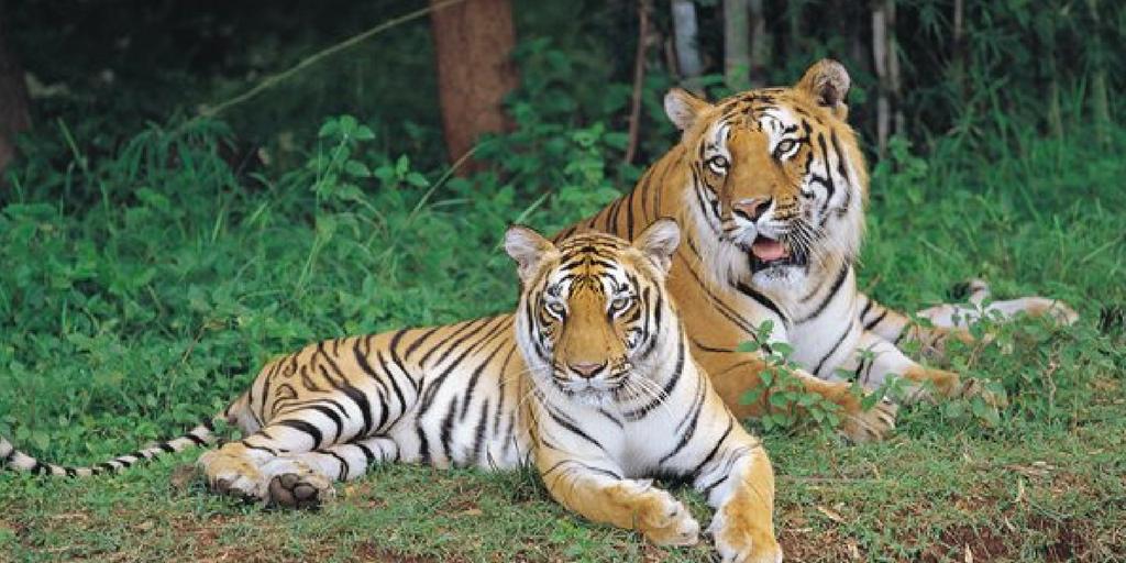 weekend getaways from Bangalore - Bannerghatta National Park