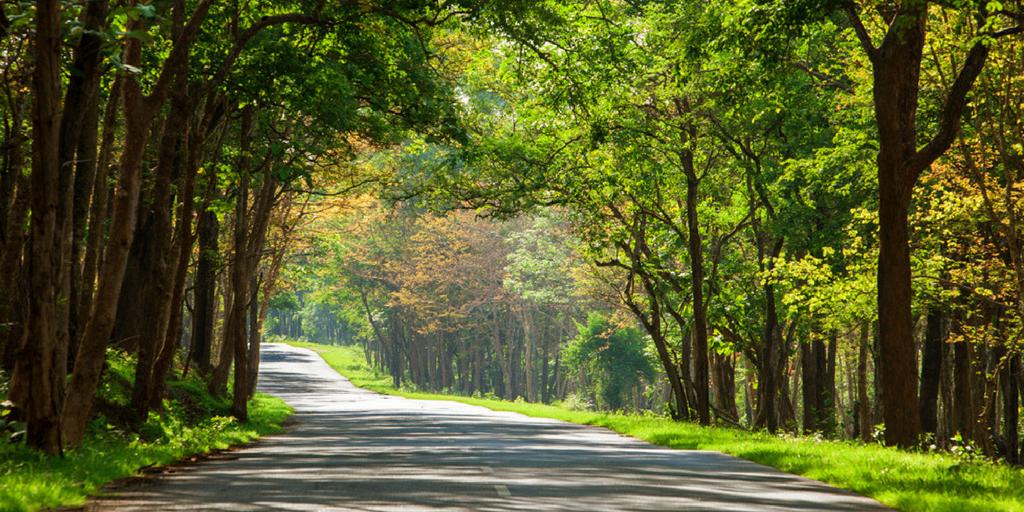 weekend getaways from Bangalore - nagarhole