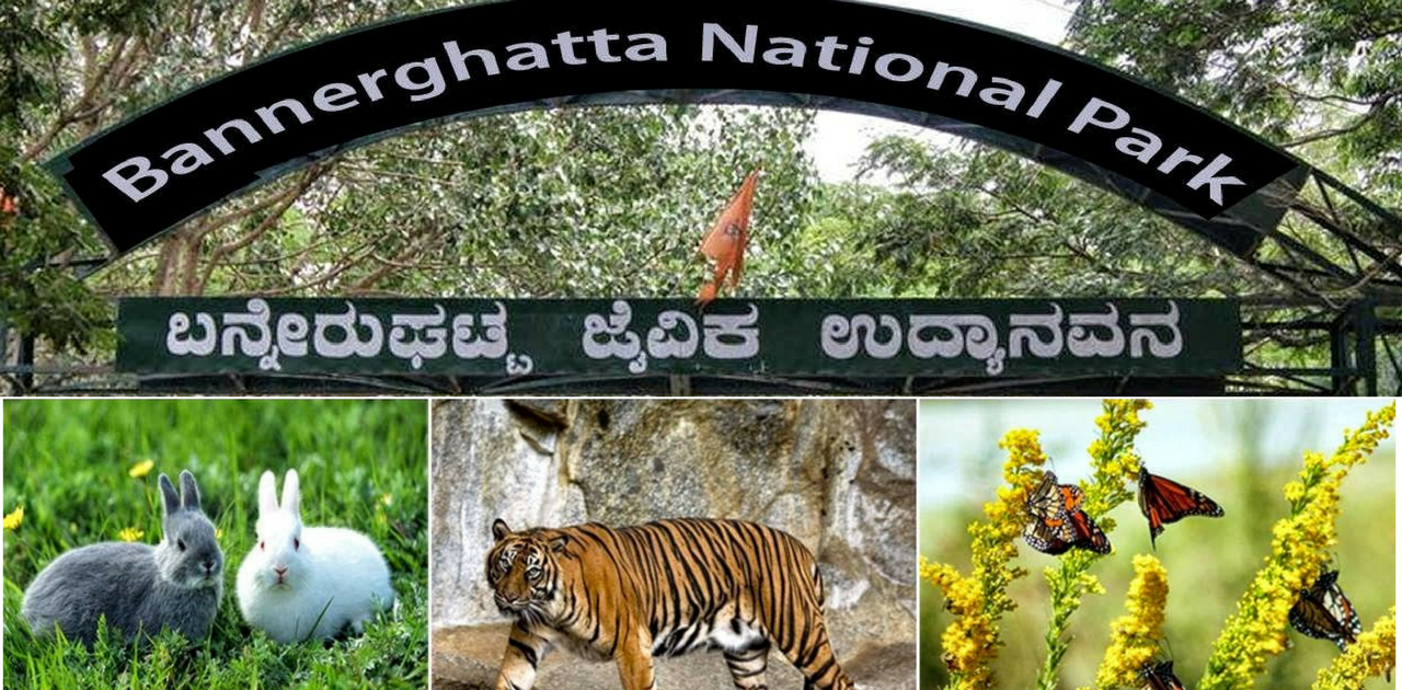 Wildlife- Things to do in Bangalore