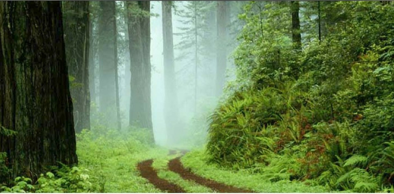 Coorg: Things to do in Bangalore