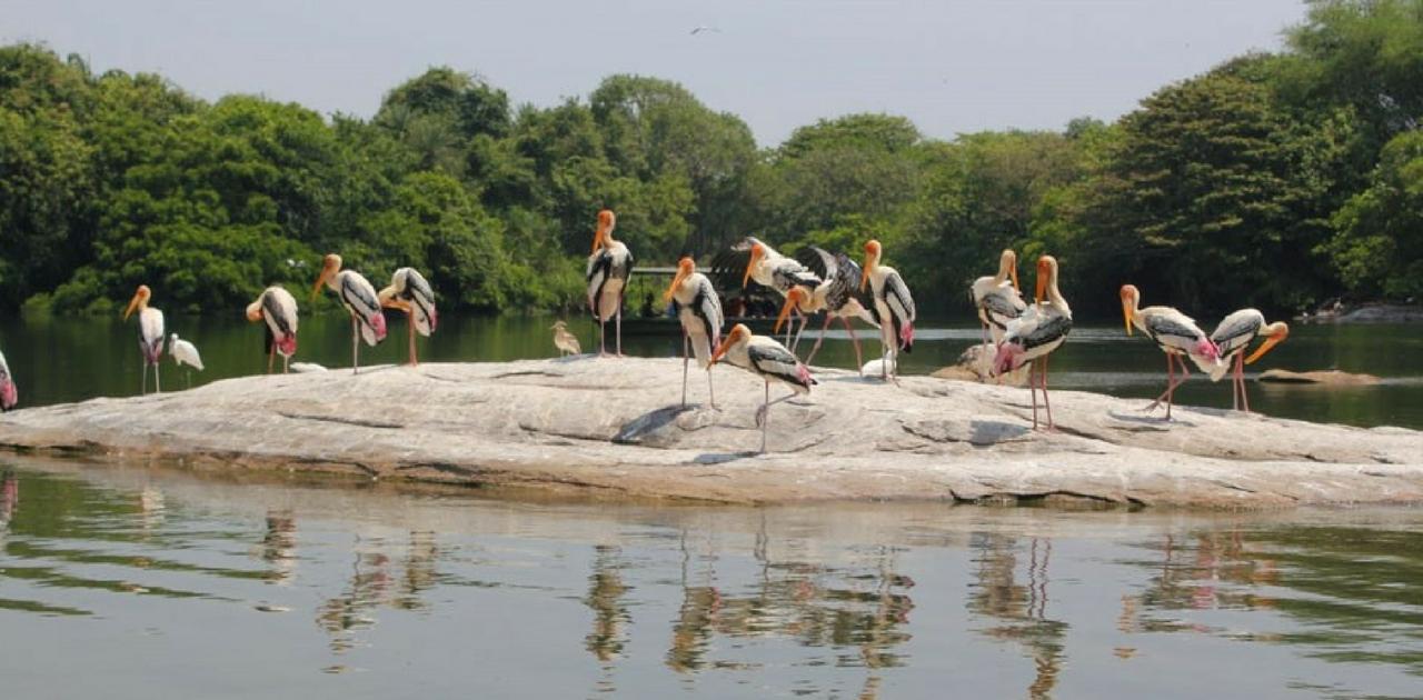 Ranganatittu: Things to do in Bangalore