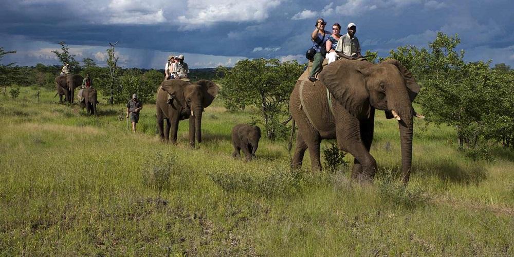 A ride through the wild!
