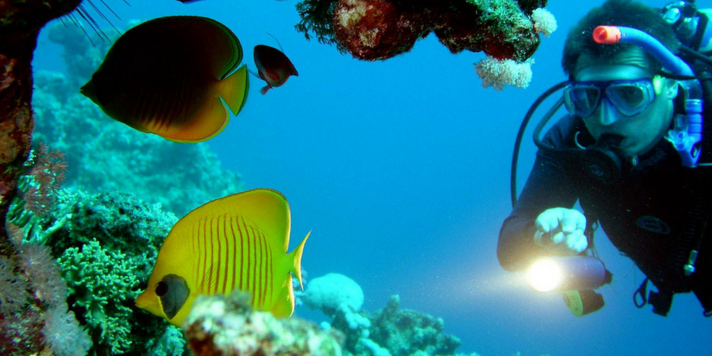 9 Best Water sports in Goa That You Must Give A Try-scuba Diving