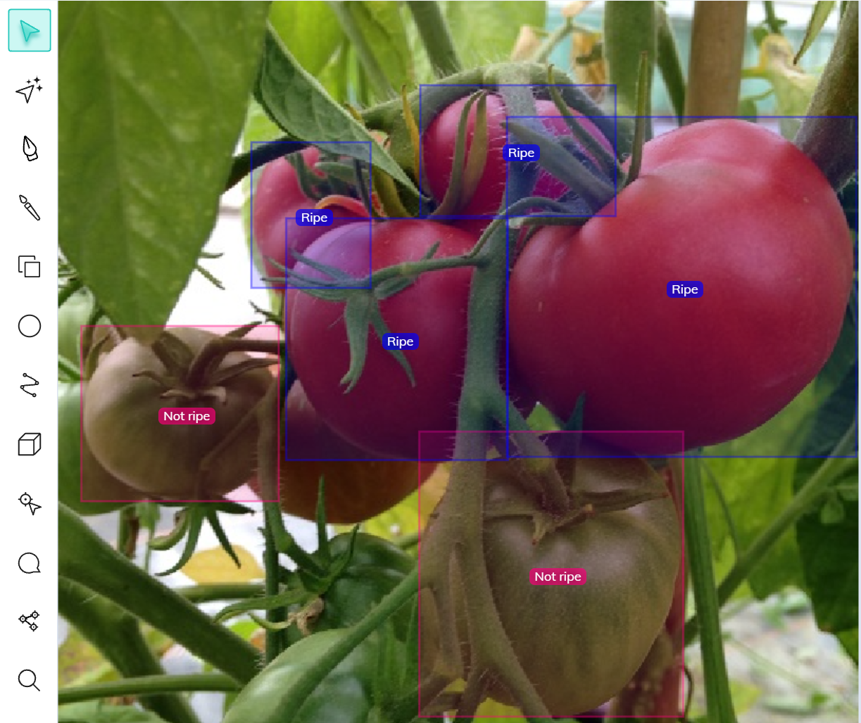 Ripe vs. not ripe tomatoes annotated with bounding boxes using V7