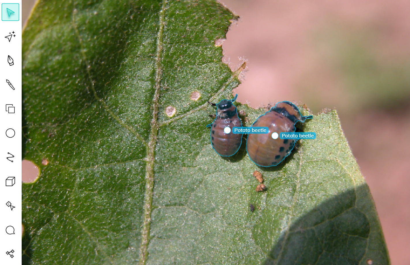 Two potato beetles labeled using auto-annotation tool in V7