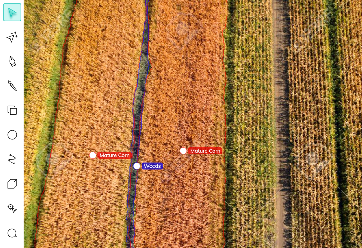 Weed and mature corn field annotation using V7