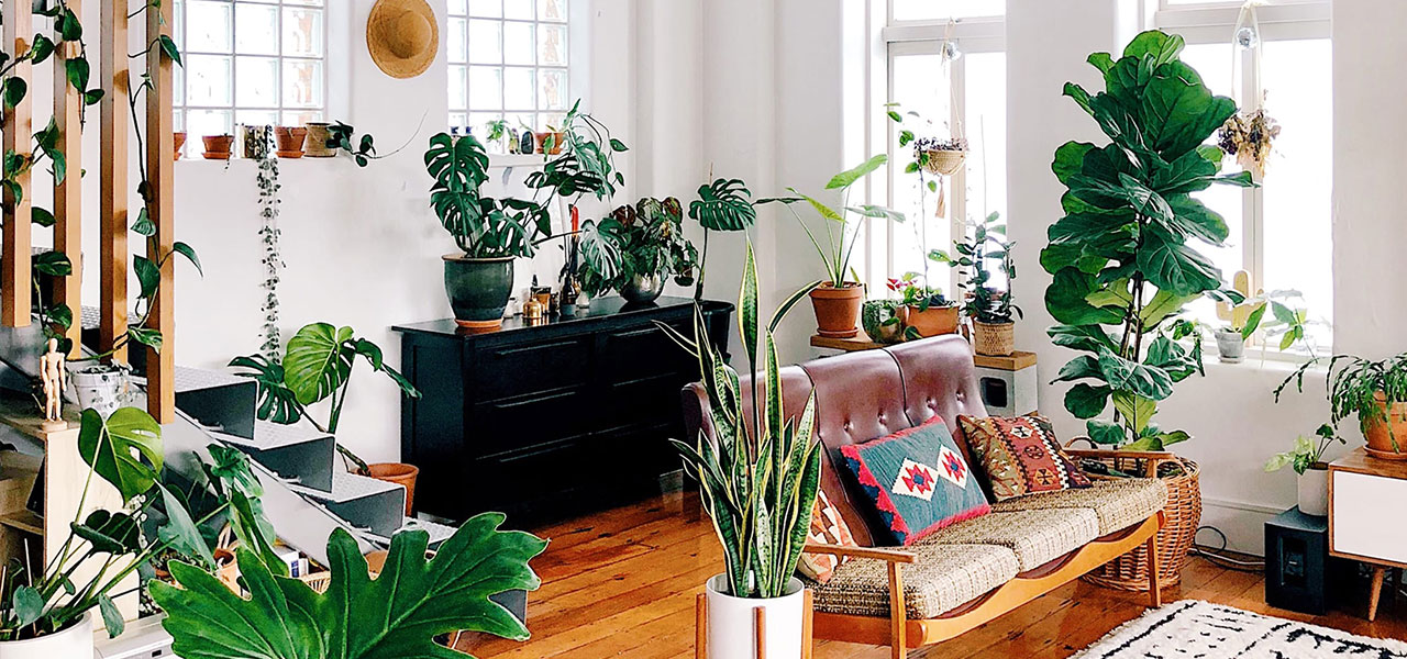 Living room cover full of houseplants.