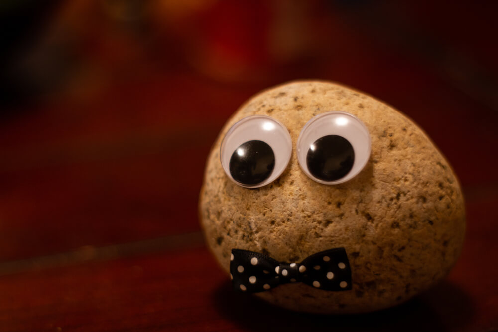 A pet rock with eyes.