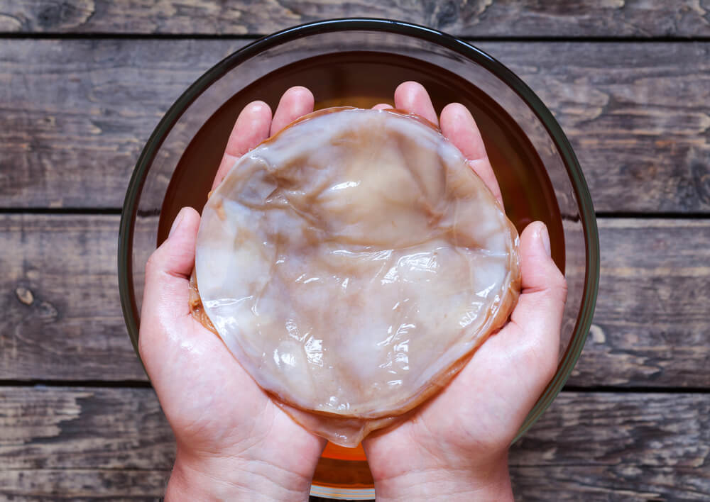 A person holding Kombucha scoby.