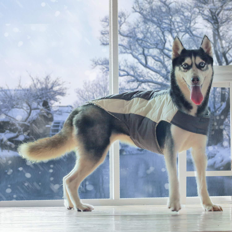 A husky in a reflective jacket.