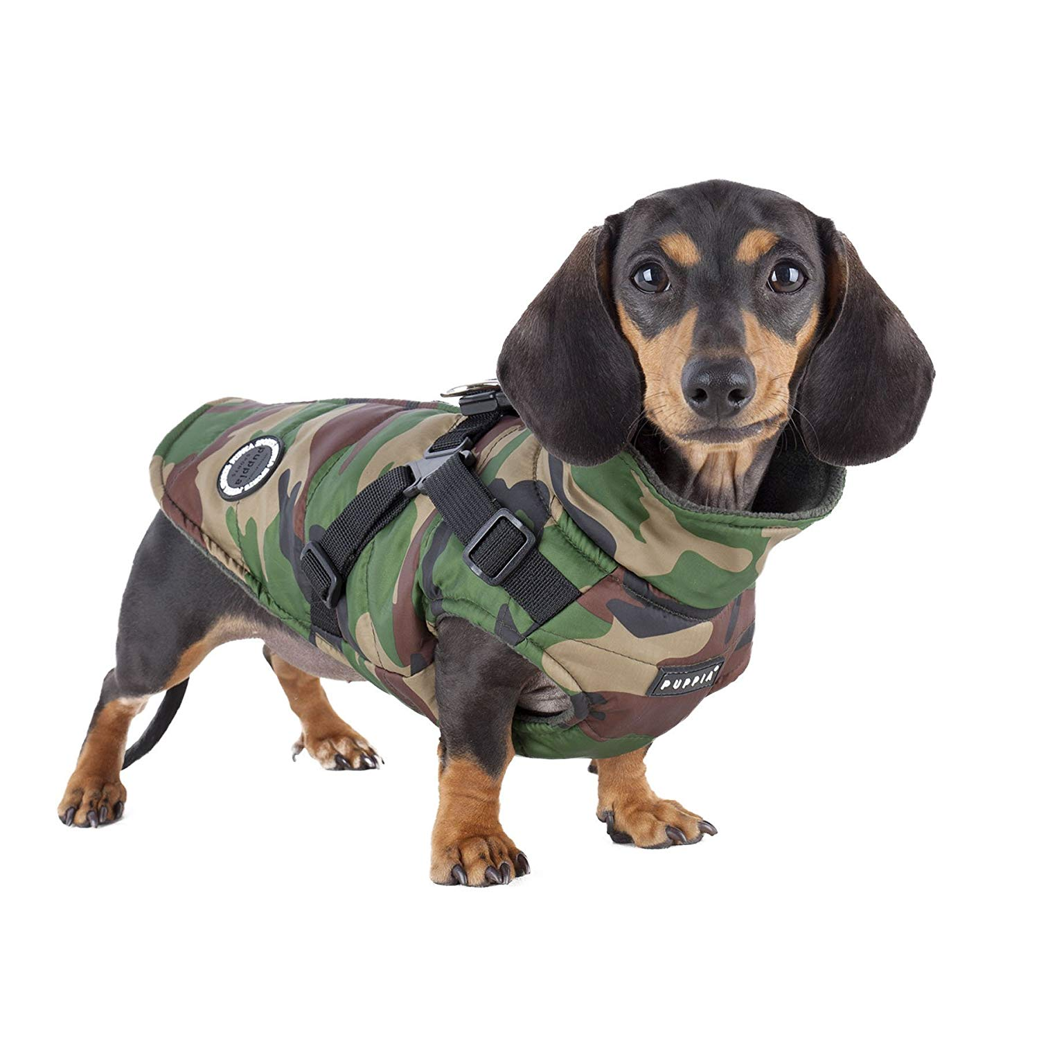 A wiener dog in a camouflage coat.